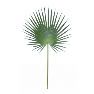 feuille artificielle Fanpalm