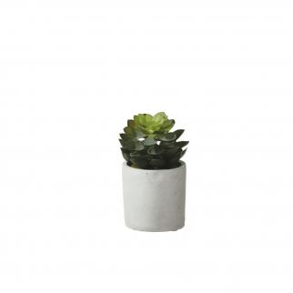 petite plante grasse artificielle