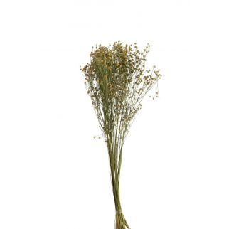 Fleurs de lin séchées