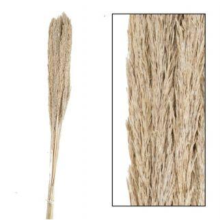 Plume d'herbe H 75cm