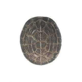 tortue décorative