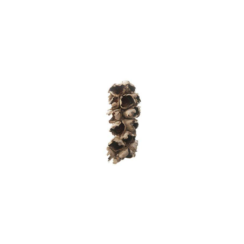 Cacho coco avec face plate (L. 30 cm)